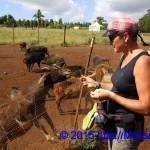 Wild Life in der Kilohana Plantation