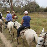 Gruppe mit Gabi auf Pferden im Gänsemarsch
