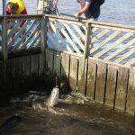Jan beim Angeln ohne Haken mit riesigem Cat Fisch