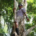 Guide im Baum