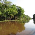 Rio Urubú mit Bäumen