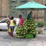Marktstand mit mehreren Trauben frischer Kokosnüsse